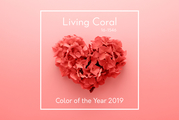 〜color of the year 2019〜今年の色は?!