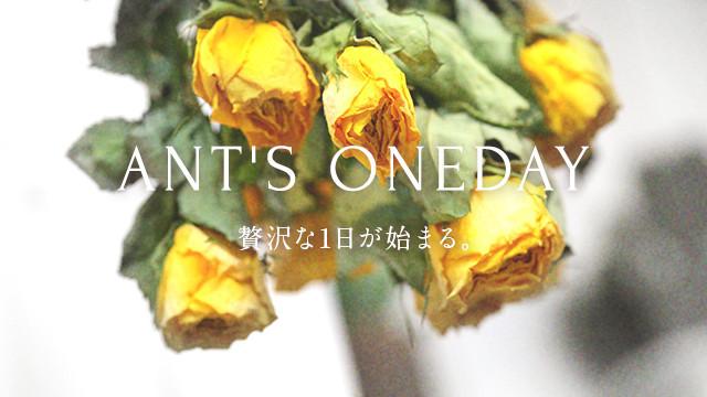 ANT'S ONEDAY